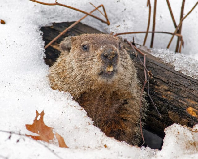 Quarantine, kids, and Groundhog Day